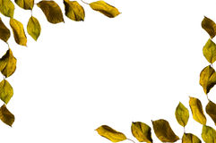Autumn Leaves. Isolated on white Stock Images