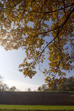 Autumn leaves. Shot against the sun near erlangen, germany Stock Photo