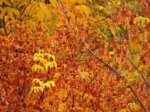 Autumn Leaves stockbild