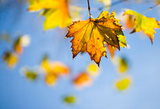 Autumn Leaves. Shallow depth of field Royalty Free Stock Photos