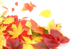 Autumn leaves. Red and yellow leaves, fall time Royalty Free Stock Photos