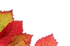 Autumn Leaves. Isolated on white stock photos