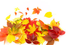 Autumn leaves. Red and yellow leaves background Stock Photos