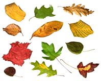 Autumn Leaves. Collage of dried autumn leaves, isolated on white Royalty Free Stock Photos