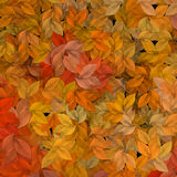 Autumn leaves. Patten Royalty Free Stock Photo