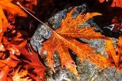 Autumn Leaves Stock Fotografie