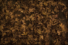 Autumn leaves. On the ground Stock Images