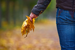 Autumn leaves. Girl holding yellow autumn leaves royalty free stock images