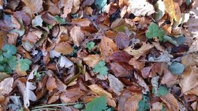Autumn Leaves foto de archivo