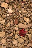 Autumn leaves. On the stones Stock Photo