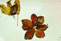 Autumn Leaves Fotografia de Stock