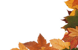 Autumn leaves. Colorful autumn leaves for background Stock Photos