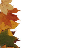 Autumn leaves. Colorful autumn leaves for background Stock Photo