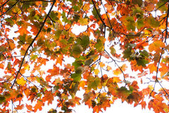 Autumn Leaves Photos libres de droits