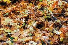 Autumn Leaves Immagini Stock Libere da Diritti