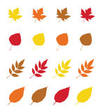 Autumn Leaves illustration stock