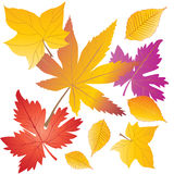 Autumn Leaves Fotos de archivo