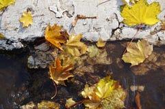 Autumn Leaves Imagem de Stock Royalty Free