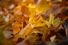 Autumn Leaves Royalty-vrije Stock Afbeelding
