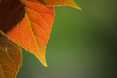 Free Autumn Leaves Stock Photography - 798442