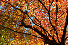 Autumn Leaves foto de stock