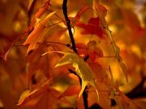 Autumn Leaves Lizenzfreie Stockbilder