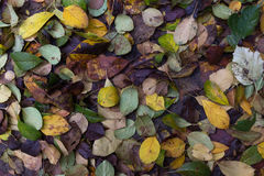 Autumn Leaves Stock Afbeelding