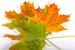 Autumn Leaves Foto de Stock