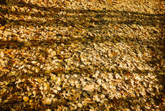 Autumn Leaves Stockbilder