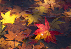 Autumn Leaves Stock Foto