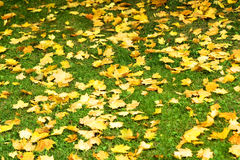 Autumn leaves 9 Royalty Free Stock Photo