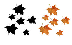 Free Autumn Leaves Stock Photography - 9297312
