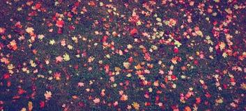 Autumn Leaves Fotografia de Stock Royalty Free