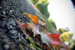 Autumn Leaves Photos stock