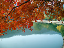 Autumn leaves above the lake Royalty Free Stock Image