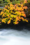 Autumn leaves above river royalty free stock photos