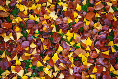 Autumn Leaves Abstract Stock Photo