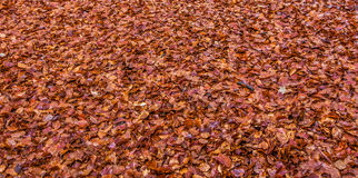 Autumn Leaves Abstract Royalty Free Stock Image