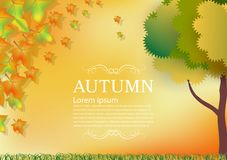 Autumn leaves for abstract background.  Stock Illustration