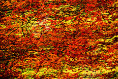 Autumn Leaves Abstract Painting stock afbeelding