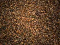 Autumn leaves abstract texture background stock image