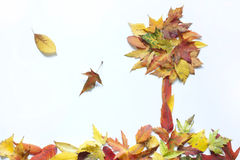 Autumn leaves abstract with tree Stock Image