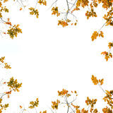 Autumn Leaves-achtergrond vector illustratie