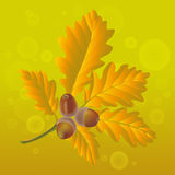 Autumn Leaves with Acorn. Autumn Background. Oak Leaves with Acorn stock illustration