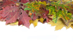 Autumn leaves and acorn with place Royalty Free Stock Photos