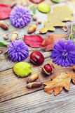 Autumn leaves with acorn, twig, chestnut over wooden background Stock Photography