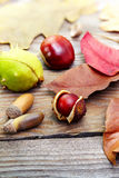 Autumn leaves with acorn, twig, chestnut over wooden background Royalty Free Stock Photography
