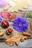 Autumn leaves with acorn, twig, chestnut over wooden background Stock Image