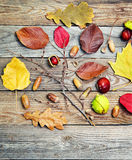 Autumn leaves with acorn, twig, chestnut over wooden background Royalty Free Stock Photos