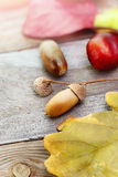 Autumn leaves with acorn, twig, chestnut over wooden background Royalty Free Stock Images